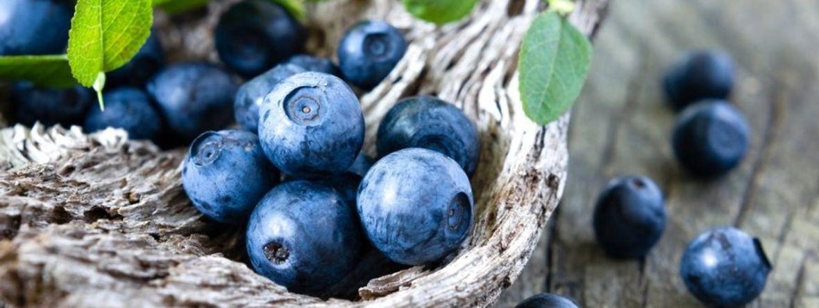 blåbär stoppande eller lösande